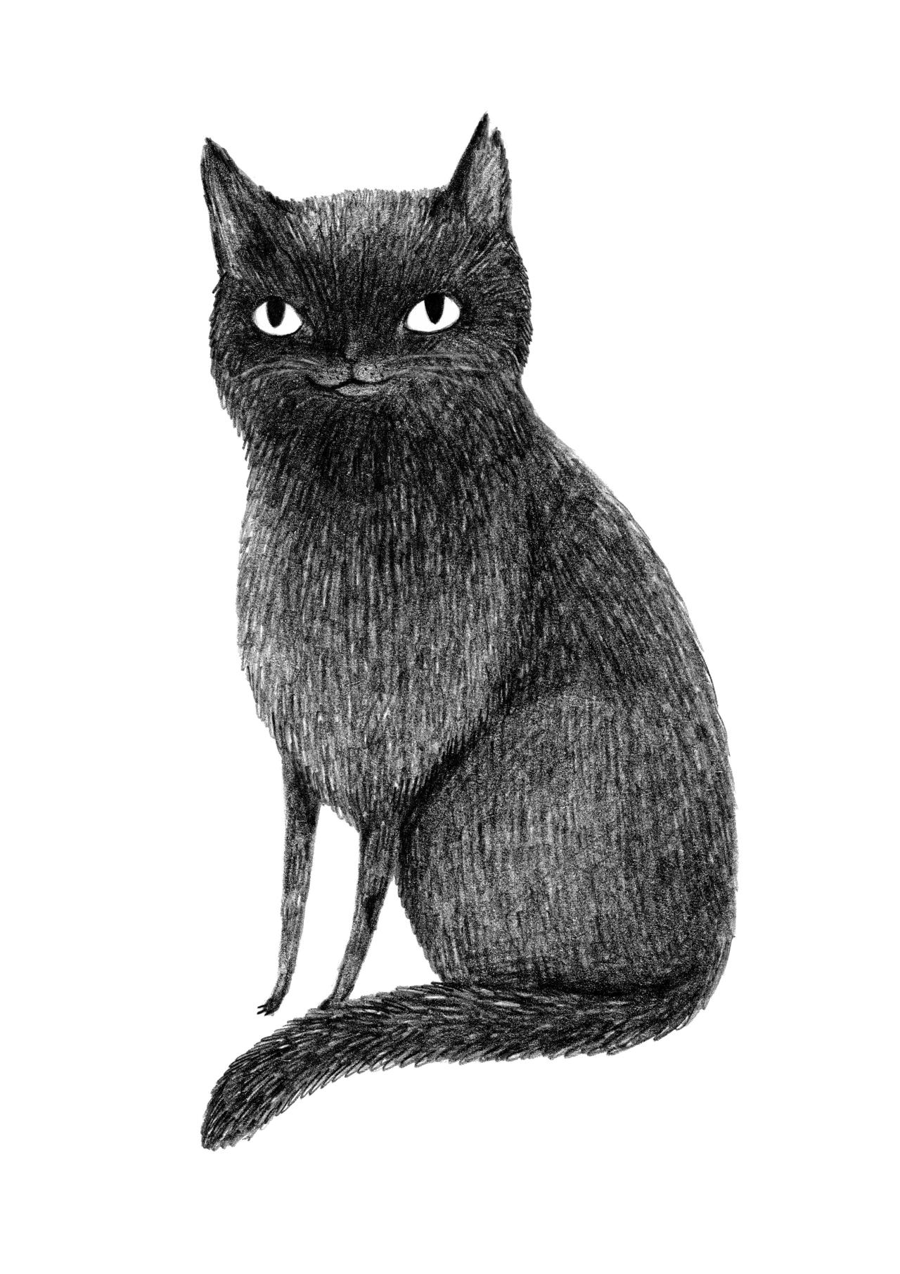 Line drawing of a black cat
